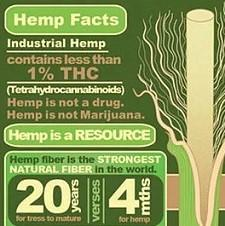 Green chart about hemp facts