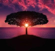 Pink and purple sky at sunset with a black silhouette of a tree with beautiful spread of intricate branches in a mushroom shape against a body of water