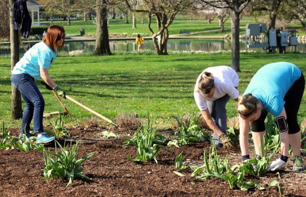 People in a garden planting