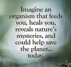 The words Imagine an organism that feeds you, heals you, reveal's nature's mysteries and could help save the planet