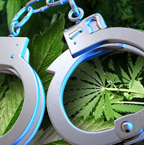 Silver handcuffs laying on green marijuana leaves