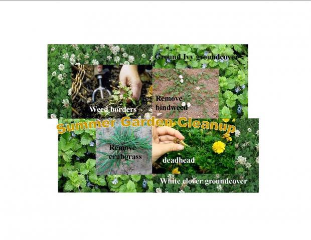 Photos of the green garden