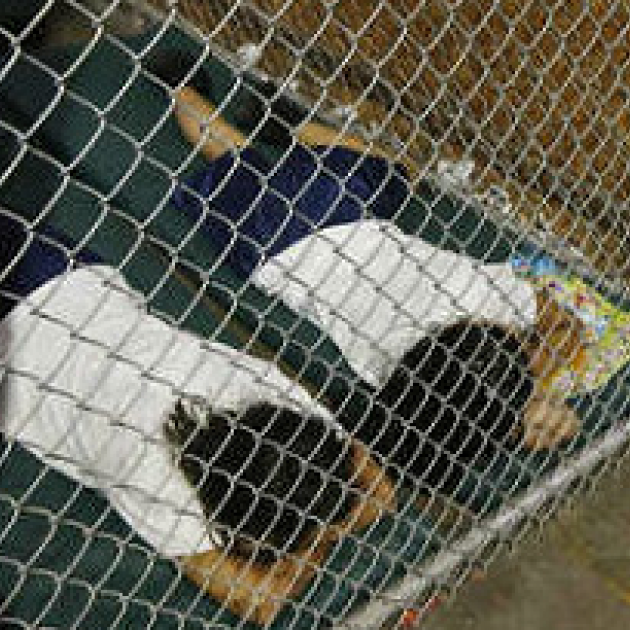 Two people on their faces on the ground behind a chainlink fence