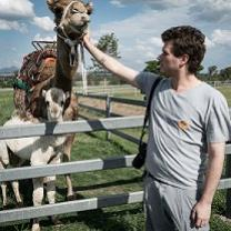 Young white man reaching over a white fence to scratch the chin of a camel with a little baby camel beside it