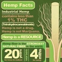 Green chart about hemp facts