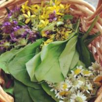 Pretty purple and yellow herbs in a basket with greens and daisies