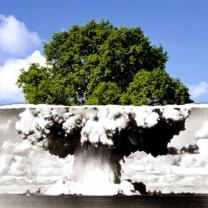 Photo showing an atomic blast at the bottom morping into a tree at the top