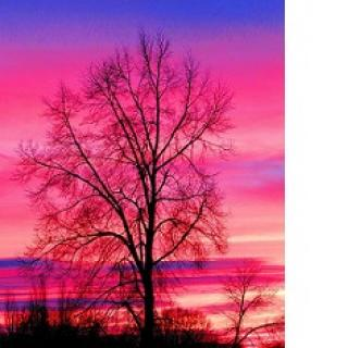Beautiful pink purple and blue sunrise in he sky and tree with no leaves in front