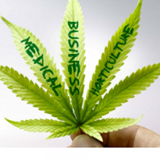 Marijuana leaf with words on the leaves saying Medical Business and Horticulture