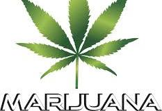A big green leaf with 7 leaves, a pot leaf it is, with words MARIJUANA in capitals below